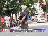 DPRD DKI Akan Larang Mengamen Pakai Ondel-ondel