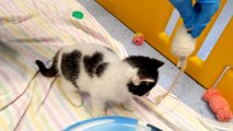 Cupid the kitten has stolen a heart this Valentines day