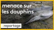 Les dauphins menacés  par la pêche dans le golfe de Gascogne : quelles solutions ?