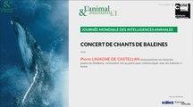 Conférence-concert : Les chants de baleines
