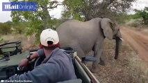 Cet éléphant vient se gratter contre une voiture de touristes
