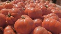 غانا: لعنة الطماطم