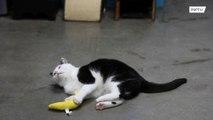 Feline grumpy?! 'World's worst cat' finds purrrfect new home