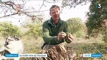 Fenêtre sur : la truffe noire du Vaucluse ravit les papilles