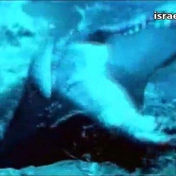 פירסומת לסידרה צבי הנינג'ה(מתוך שידורי ערוץ הילדים של שנת 1997)