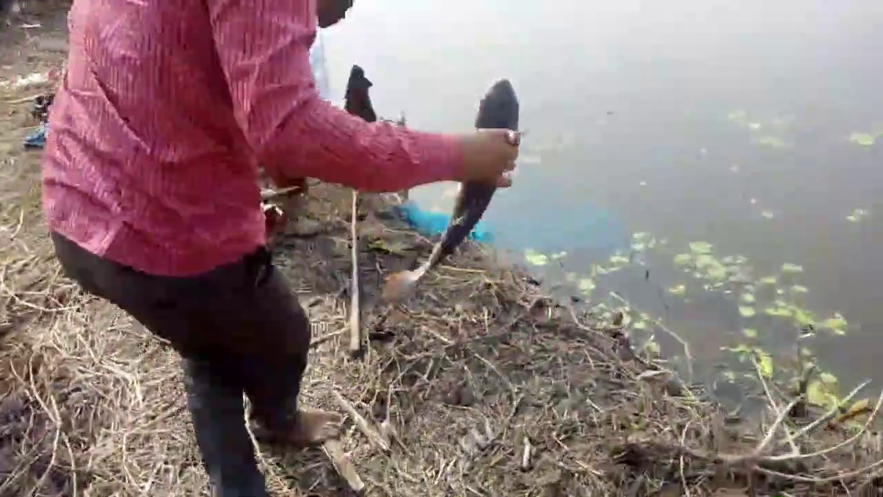 Sanjeeb & Sk Jabed Fishing at Buro Da's Pond | Rozina's Club
