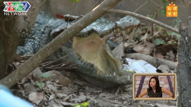 DO CROCODILES HAVE TONGUES ? A DANGEROUS MISSION TO FIND OUT THE ANSWER