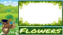 IMPARIAMO L'INGLESE: I FIORI - FLOWERS