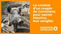 Le combat d'un couple de Corréziens pour sauver Maurice, leur sanglier