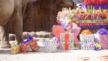 الفيلة ترومبيتا تحتفل بعيد ميلادها التاسع والخمسين في غواتيمالا