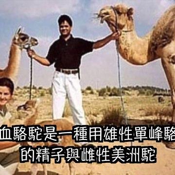 【五大 】5個 無法相信的雜種動物 ,Top 5 hybrid animals you won't believe exist - 三爺奶奶頻道