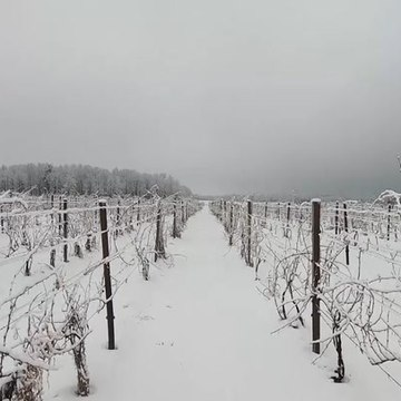 Western New York vineyards face major cold front