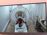 Premier scanner pour animaux domestique de la Loire - Reportage TL7 - TL7, Télévision loire 7