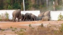 Un troupeau d'éléphants passe à travers un mur en béton