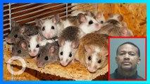 放老鼠騙錢!美國猶他州男子旅館內偷放老鼠