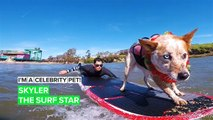 I'm a Celebrity Pet! Skyler is a surf champ, therapy dog and best bud