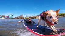 Skyler, der Surfhund-Champion