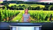 Vins français : le secteur en crise en raison des taxes américaines