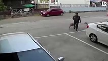 Two dogs fighting in the street throw a defensless pedestrian