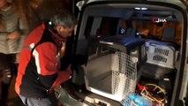 Yaralı ve hasta olan 2 kedi ve 3 köpek için gece yarısı seferber oldular