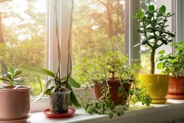 La NASA recomienda estas 5 plantas para purificar el aire