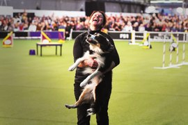 The fast and the furriest: inside the weird world of dog agility – video