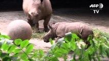 Le zoo de Singapour est fier de présenter ses bébés animaux