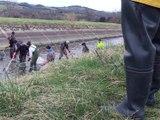 Une pêche pour sauver les poissons du canal du forez - Reportage TL7 - TL7, Télévision loire 7