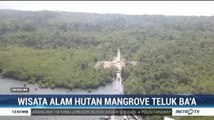 Wisata Alam Hutan Mangrove Teluk Baa