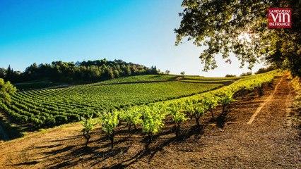 La cave Anne de Joyeuse élabore des vins tranquilles à Limoux