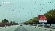 Biblical SWARM of locusts invade Saudi Arabia in terrifying footage