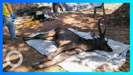 死んだ鹿の体内から約7キロのゴミ見つかる タイの国立公園 - トモニュース