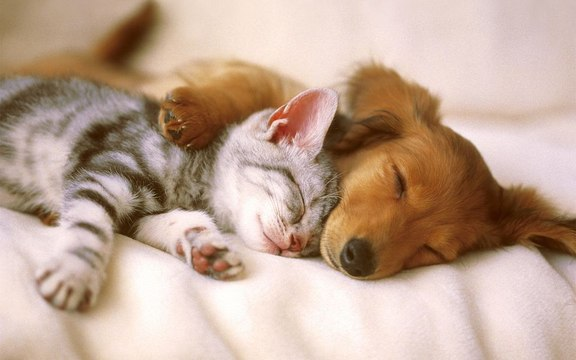 Petting dogs and cats can reduce stress, says a study