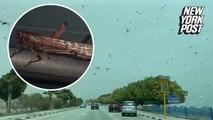 Plague of locusts swarm Saudi Arabia in eerie raid