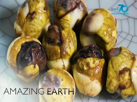 """Amazing Earth: What are the health benefits of balut quail eggs or """"pugolot?"""""""
