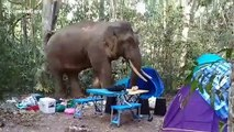 Wild elephant tramples through camp site before stealing bag of food in Thailand