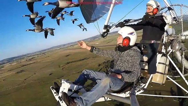 Amazing flights with birds on board of a microlight. Christian Moullec avec ses oiseaux