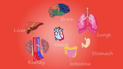 Human body organs -_human body organs in Hindi Urdu, human body organ system,