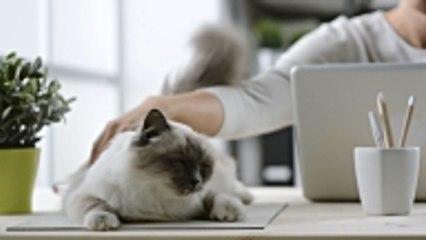 13 Ways to Spoil you Pet