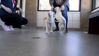Sibling Love: Dog Acts As Guide For Blind, Deaf Sister