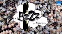 Le BZZZ de la semaine 38 - Les abeilles peuvent-elles nous aider à nous détendre