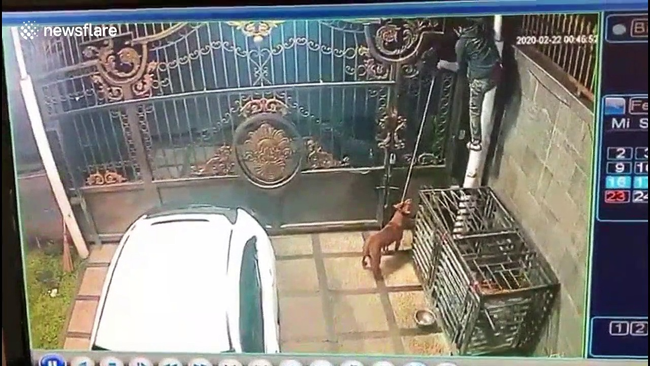 Shocking footage shows man stealing dog from gated home in Indonesia