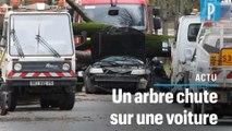 Vents violents à Paris : un automobiliste tué par la chute d'un arbre