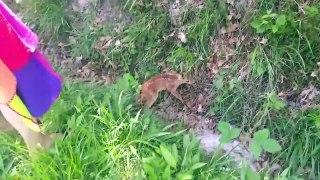 Sauvetage d'un bébé Faon tombé dans un fossé... Moment adorable