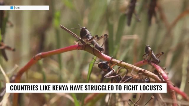 Check This Out: UN says Africa locust plague could get worse