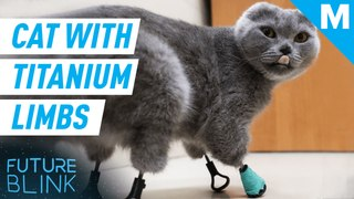 This cat is living her best life with new 3D-printed titanium limbs — Future Blink