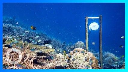 健康なサンゴ礁の音で不健康なサンゴ礁の健康状態が恢復 - トモニュース