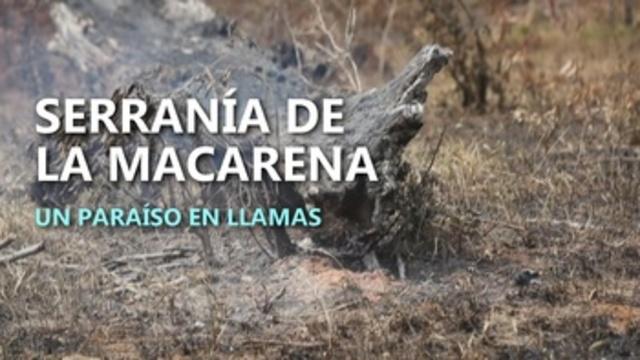 La ilegalidad y las llamas consumen la biodiversidad colombiana