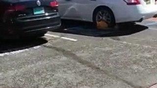 Sabot de fourrière, il tente de rouler en voiture quand même !