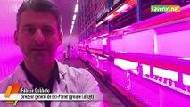 Bio Planet cultive le basilic dans une « ferme verticale »